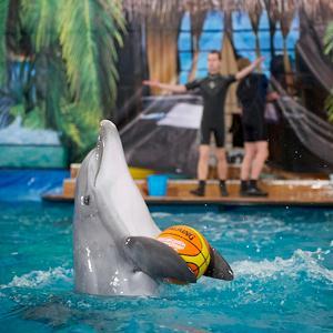 Дельфинарии, океанариумы Пушкино