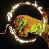 Цирки в Пушкино
