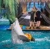 Дельфинарии, океанариумы в Пушкино